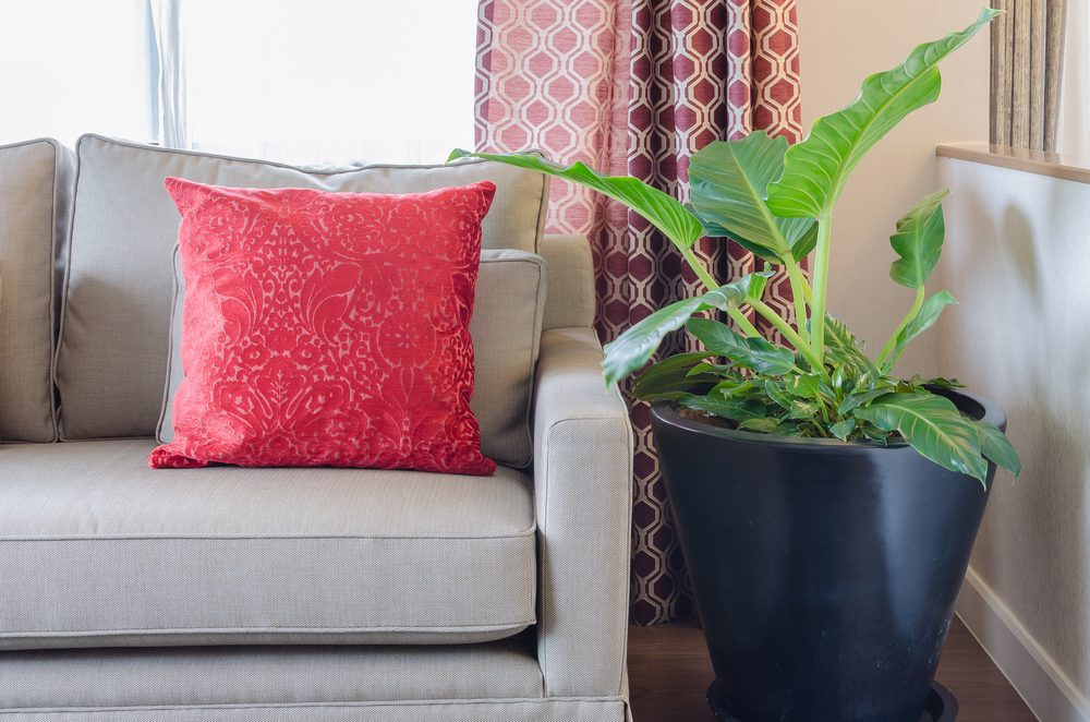 How To Find The Perfect Place For Your House Plants